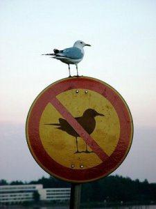 bird_breaking_the_rules
